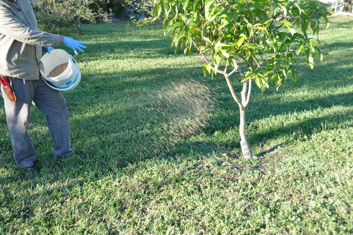 Fertilizer 101 Edible South Florida