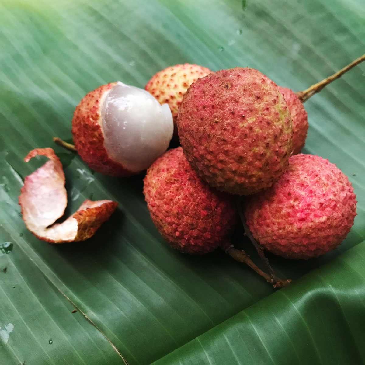 Welcome, Short, Sweet Lychee Season