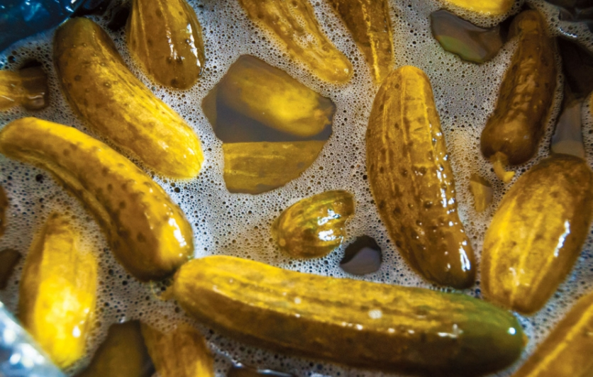 Dill pickles in brine