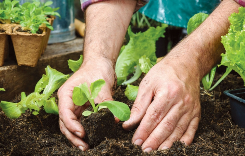 Gardening, planting and timing
