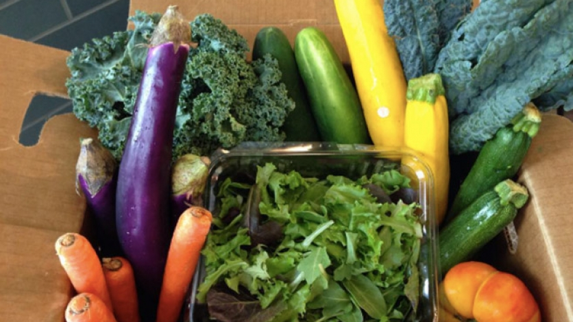 Urban Vegetable Project CSA