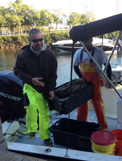 Bringing in lobster and stone crabs