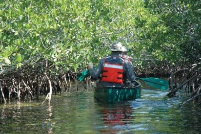 Canoeing in mangroves