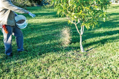 When (and how) to fertilize