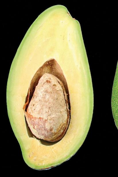 Donnie avocado