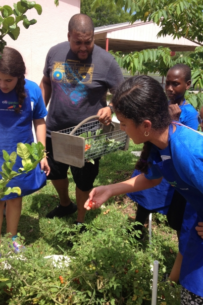 The Education Fund food forest