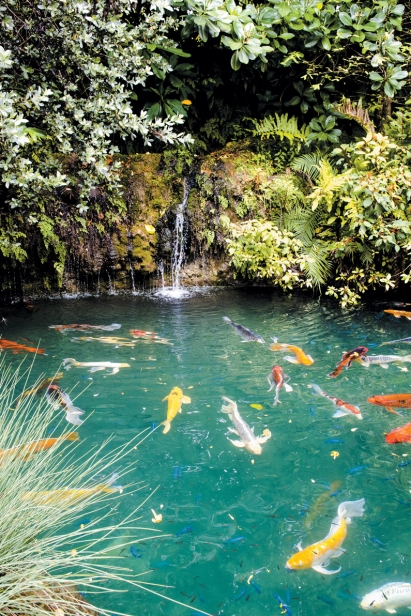 Koi pond at Patch of Heaven