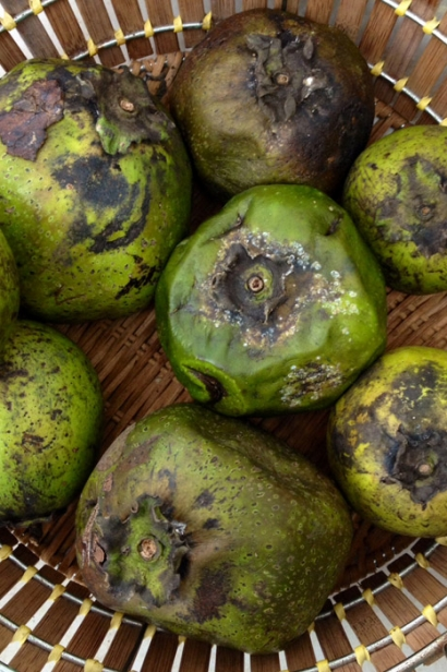 how to eat frozen fruit black sapote fruit