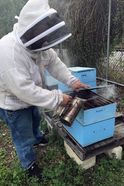 Hives at Fruit and Spice Park
