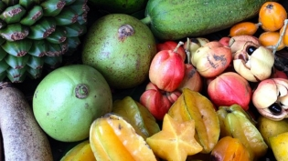 Tropical and seasonal fruits in South Florida
